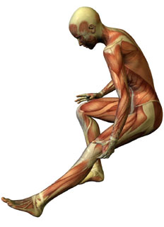 Graphic showing musculature of person holding their leg